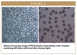 Optical microscopy image of PLGA beads encapsulating water droplets containing API before (left) and after drying (right).