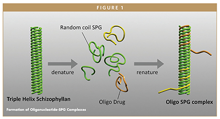 Formation of Oligonucleotide-SPG Complexes
